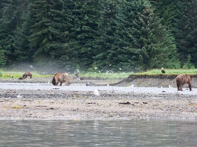 Juneau Shore Excursion | Pack Creek Bear Tour