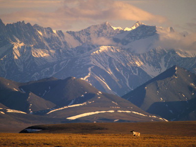 Alaska Land Tour with Denali, Glaciers and the Arctic
