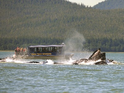 Juneau Shore Excursion | Whale Watching Adventure