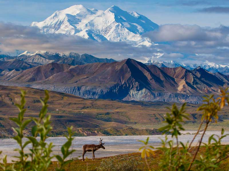 Talkeetna Denali Alaska Rail Explorer | Denali National Park